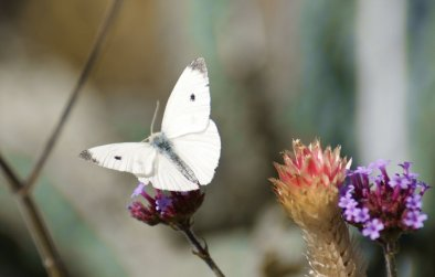 white_moth_by_motrav-d30aeug