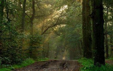 travelling_on_a_dark_path_by_jchanders-d2zfmin