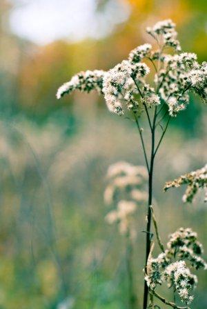 Wildflower_by_obrazu