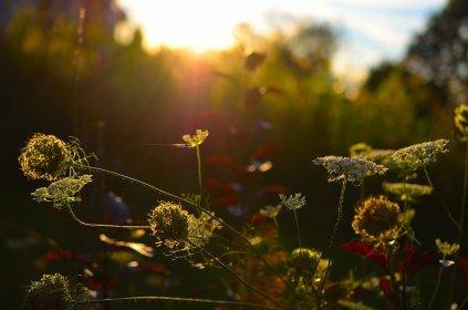 wildflowers_by_lux_ex_machina-d6u15pc