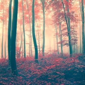 Red vintage forest