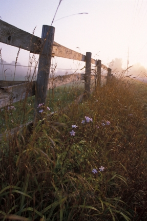 Horse Corral Fence along Road with Roadside Flowers