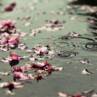 floating_petals