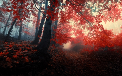 nature_autumn_forests_paths_mist_red_leaf_wallpaper_2560x1600_www-wallpapersub-com