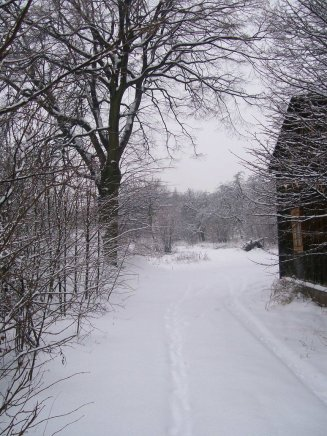 snowondust